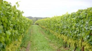 ワイナリー巡りにおすすめ!神の雫に登場した日本ワインの生産者