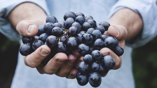 美味しいワインを造る新進気鋭の日本ワイナリー!神の雫に登場