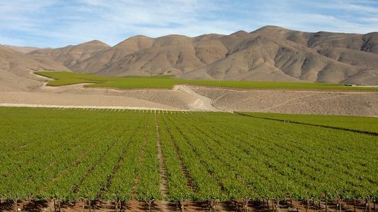 chile-vineyard