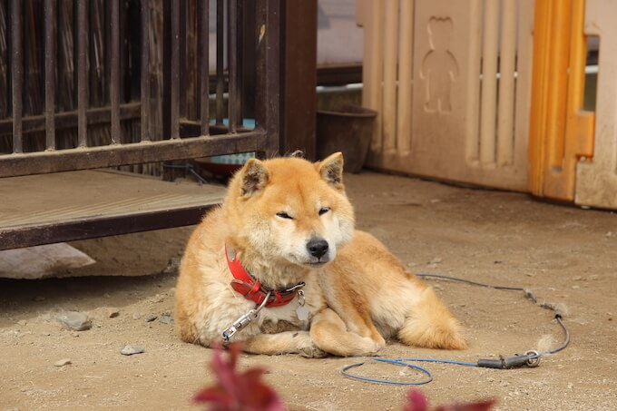 dog-katsunuma