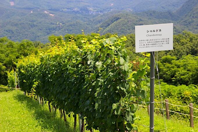 日本のワイン用ぶどう畑