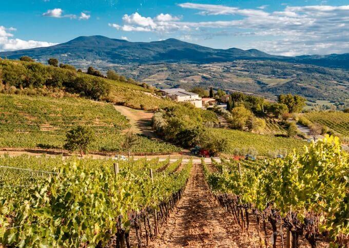 winery-poggio-di-sotto