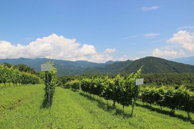 登美の丘ワイナリーのぶどう畑