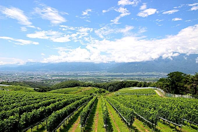 登美の丘ワイナリー展望台からの景色