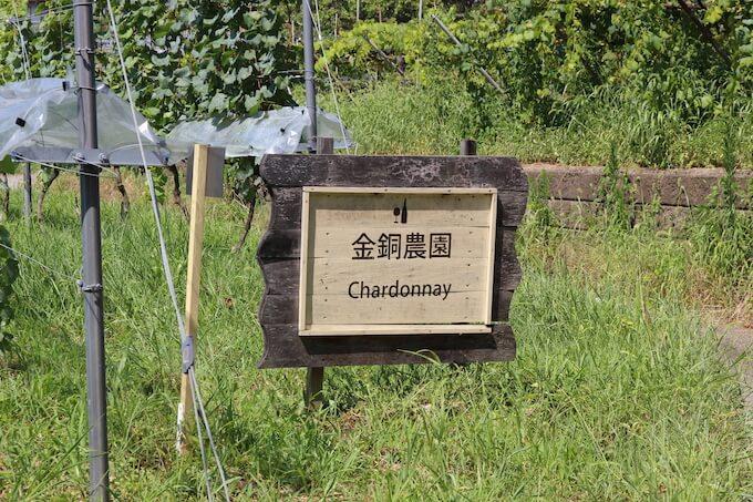 河内ワインのぶどう畑