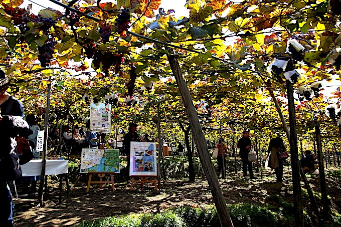 カタシモワイン祭り葡萄畑会場