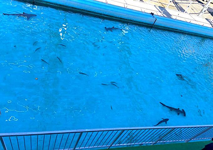 むろと廃校水族館のプール