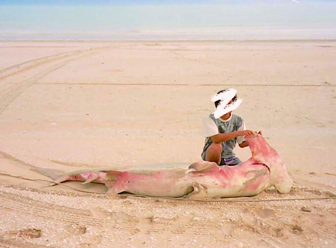 サメ漁で獲ったハンマーヘッドシャーク